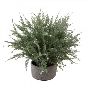 Cypress Pot