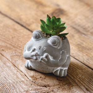 Frog with Succulent