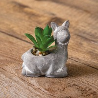 Lama with Succulent