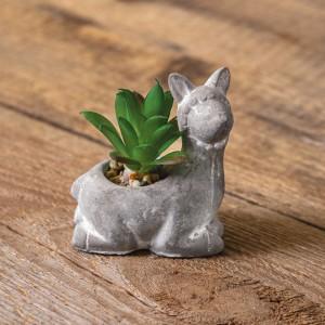 Lama with Succulent