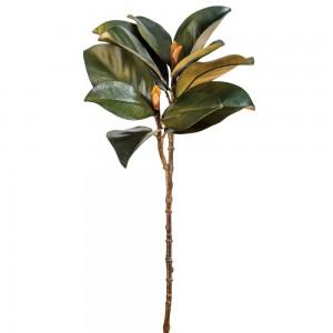 Magnolia Leaf and Bud Stem