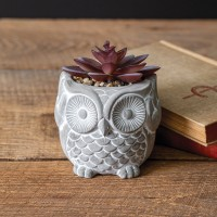 Owl with Succulent