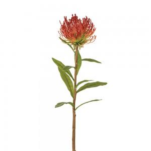 Protea Pick - Box of 2