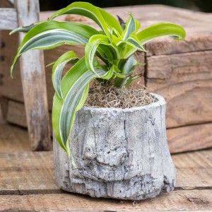 Small Log Cement Planter