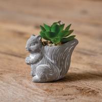 Squirrel with Succulent