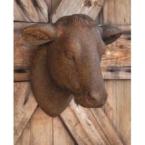Yearling Heifer Head